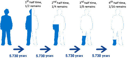 Representation of half-time in 14C  decay.   Source: http://www.icri-go.it