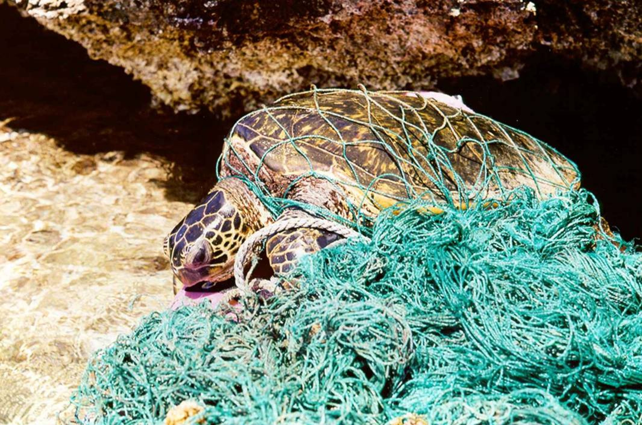 Abandoned fishing nets can be a threat not only for the fish but also for marine reptiles and mammals (Photo NOAA)