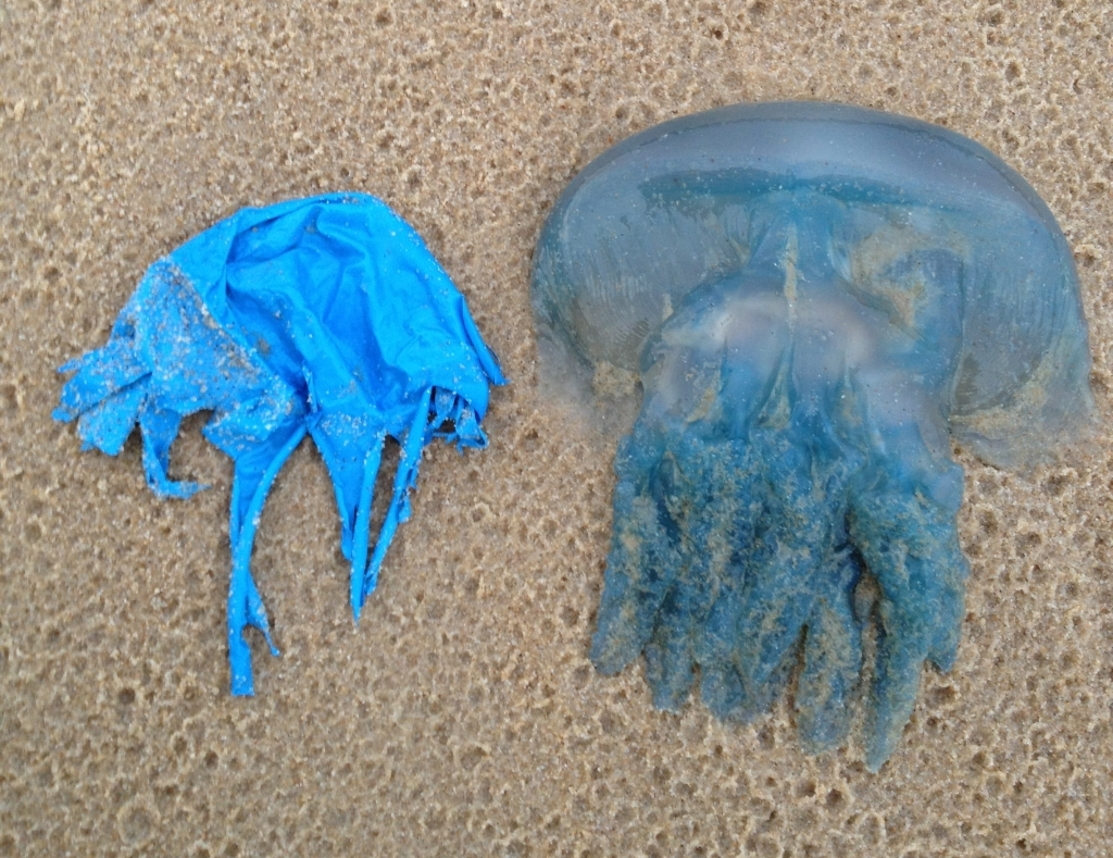 Plastic bags and jellyfish are similar (Photo NOAA)